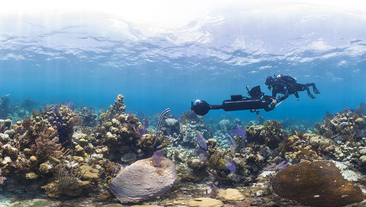 Oxford will show a film that highlights the spread of coral bleaching.