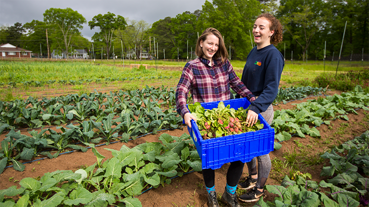 Oxford students harvest vegetables from the farm.